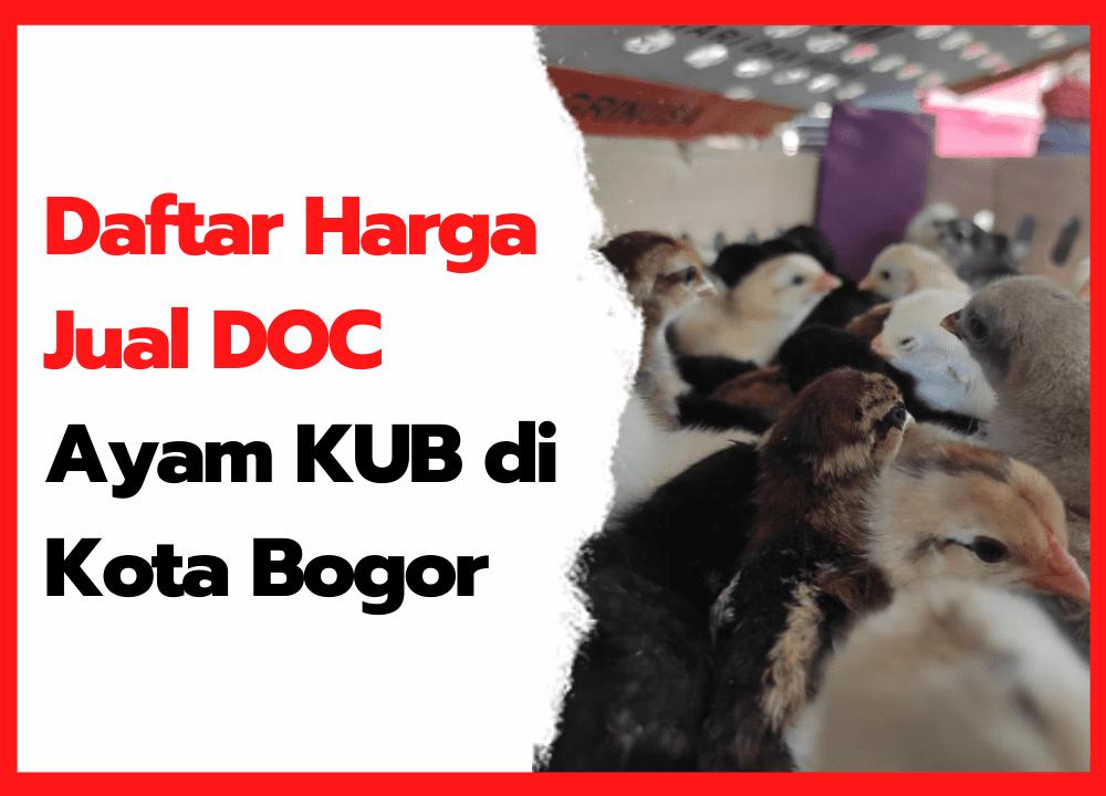 Daftar Harga Jual DOC Ayam KUB di Kota Bogor   cover