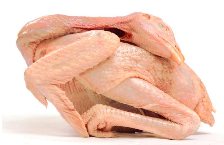Peluang yang masih cukup terbuka bagi para peternak salah satunya adalah mengolah hasil panen menjadi karkas daging ayam kampung   image 9
