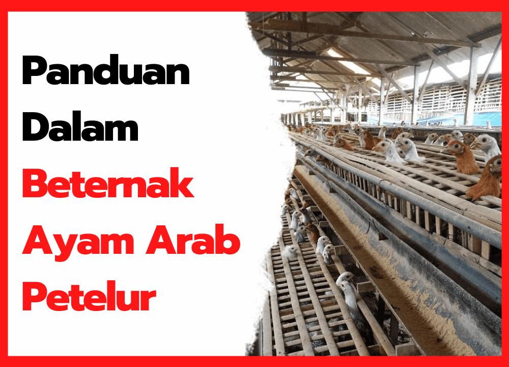 Panduan Dalam Beternak Ayam Arab Petelur | cover
