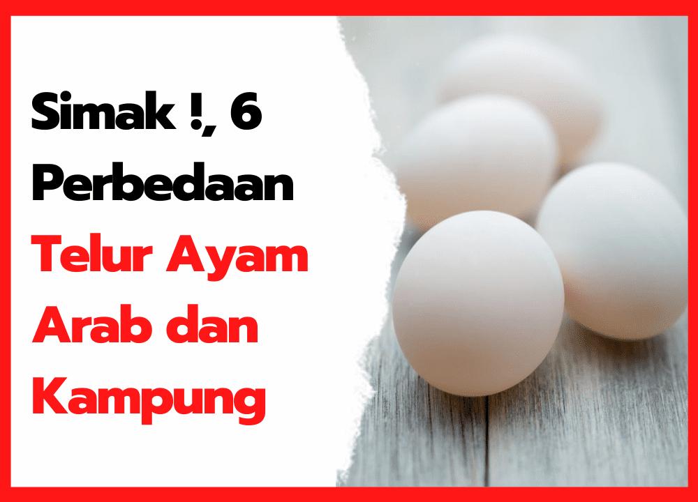 Simak !, 6 Perbedaan Telur Ayam Arab dan Kampung | thumbnail