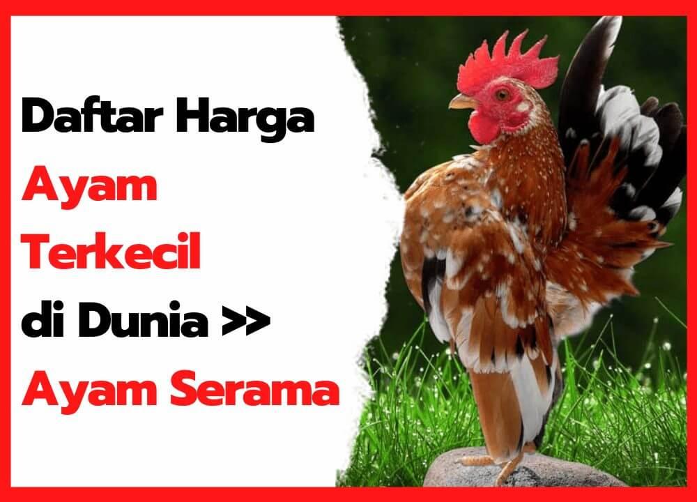 Daftar harga ayam serama dari usia anakan sampai dewasaa   cover