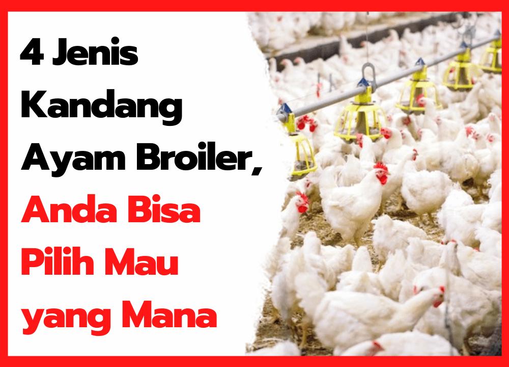 4 Jenis Kandang Ayam Broiler, Anda Bisa Pilih Mau yang Mana