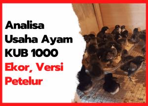 Analisa Usaha Ayam KUB 1000 Ekor, Versi Petelur | cover