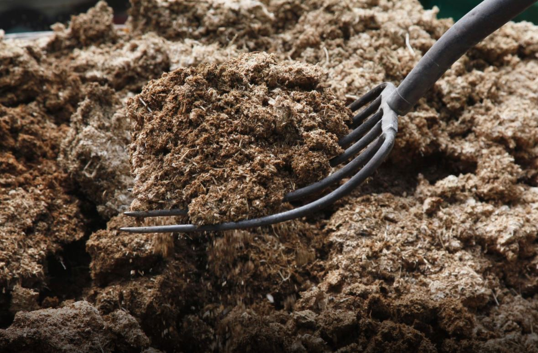 Kotoran Bebek yang menumpuk dan tidak segera diberisihkan dapat menjadi sumber penyakit bagi bebek | image 3