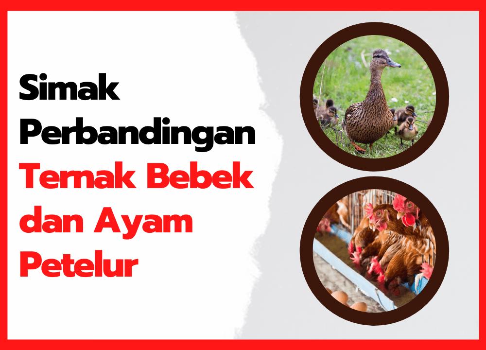 Apa Saja Perbandingan Ternak Bebek dan Ayam Petelur?