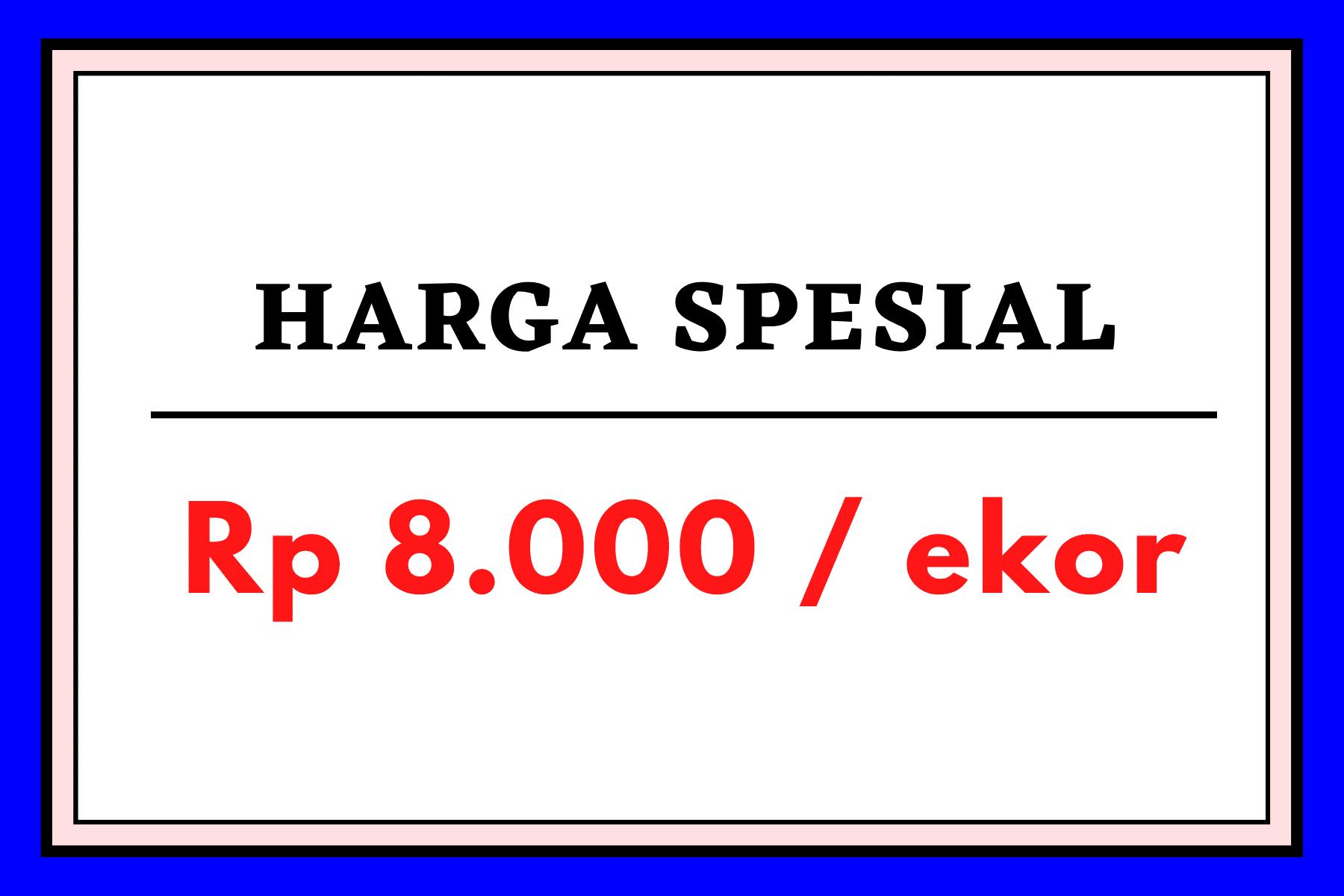 HARGA SPESIAL 1 HOBI TERNAK word1